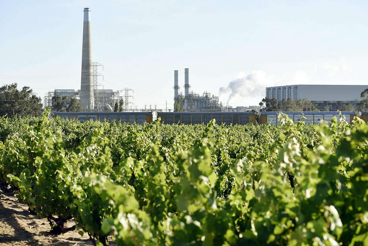 A PG&E power plant is seen in the background behind Evangelho Vineyard in Antioch, CA Wednesday, June 1st, 2016.