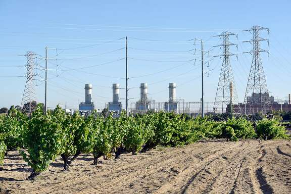 A PG&E power plant looms in the background behind head trained vines of zinfandel and mourvedra grapes at Evangelho Vineyard in Antioch, CA Wednesday, June 1st, 2016.