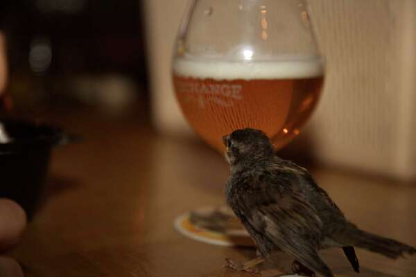 Maggie the bird is standing next to a beer at the Growling Exchange.