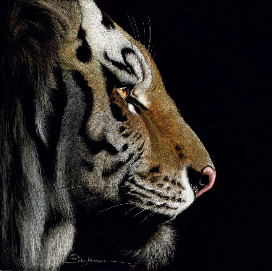 """Profile of a Tiger"""