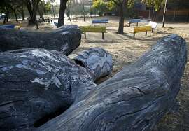 A carving of a human figure emerging from a tree trunk is located in a park at the corner of Golden Gate Avenue and Webster Street in San Francisco, Calif. on Friday, Sept. 18, 2015.