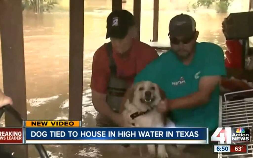 Dog Left For Dead During Texas Floods Saved By Fort Bend Rescue - Some people tied their dogs up and left them to die during the flood