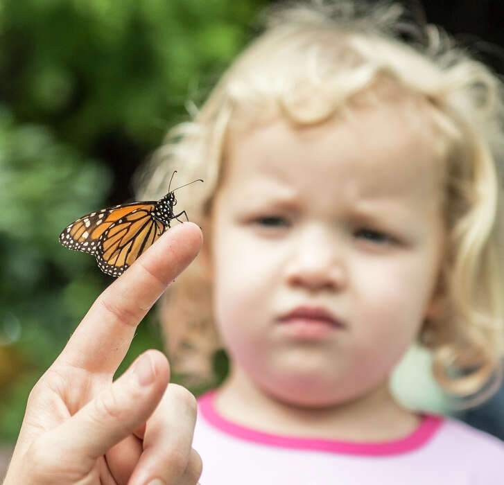 """Charlotte Meyer, 3, checks out a Monarch butterfly on the finger of San Antonio Botanical Garden family adult and education program specialist Emma Trester-Wilson during the garden's """"Winged Wonders"""" exhibit."""