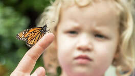 "Charlotte Meyer, 3, checks out a Monarch butterfly on the finger of San Antonio Botanical Garden family adult and education program specialist Emma Trester-Wilson during the garden's ""Winged Wonders"" exhibit."