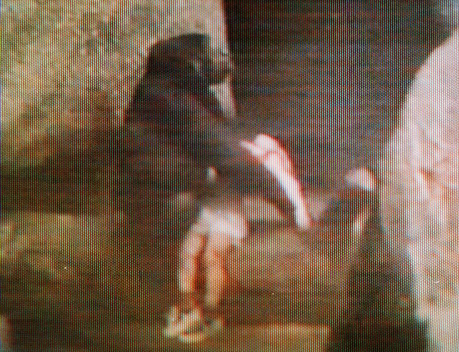 In this Friday, Aug. 16, 1996 file photo, Binti Jua, an 8-year-old female gorilla, carries an injured 3-year-old boy to a service gate after the child fell 18 feet to a concrete floor in the primate exhibit at the Brookfield Zoo in Brookfield, Ill. The boy climbed a 3-foot railing and fell in the primate exhibit at the zoo and is picked up by the motherly gorilla, who carries him in her arms to a gate where zookeepers could get him. A 3-year-old boy's breach of a gorilla exhibit at the Cincinnati Zoo on Saturday, May 28, 2016, leading authorities to fatally shoot the gorilla to protect the child, has focused attention on zoo enclosures and security. (AP Photo/WLS-TV, File) Photo: AP