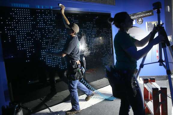 The California Academy of Sciences is opening a new coral reef exhibit as an interactive display is being installed on Thursday, June 2, 2016 in San Francisco, Calif..