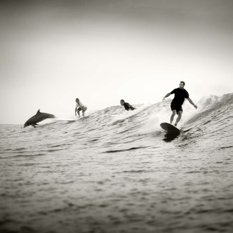 """Surfing Dolphin, 2012."" (For more ""Surf Texas"" photos, scroll through the gallery.) Photo: Copyright Kenny Braun"