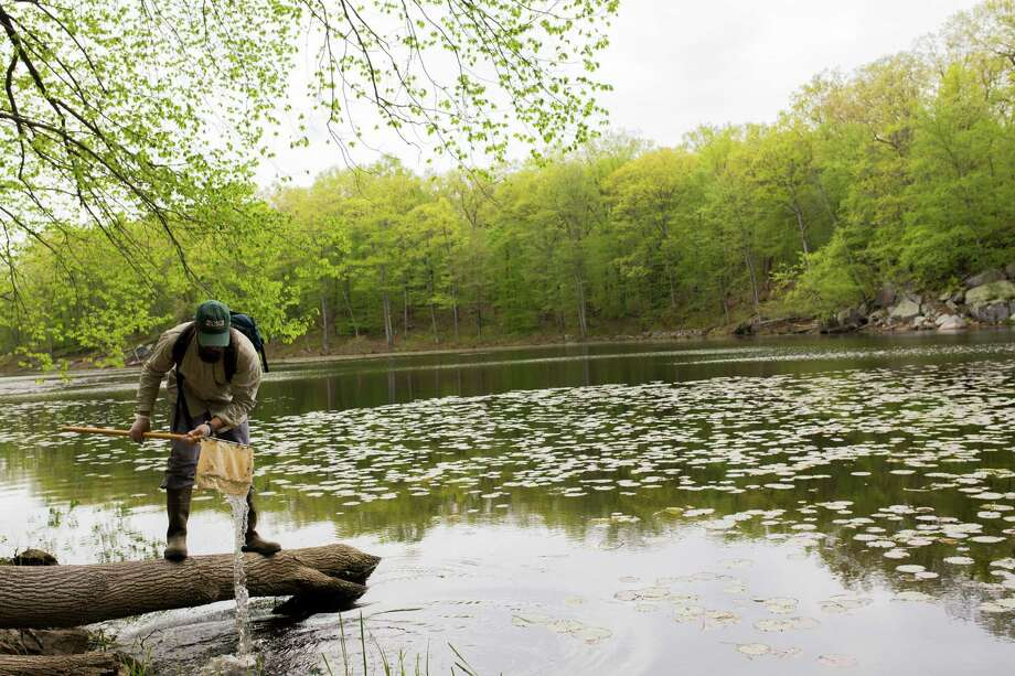 Evan Grant, a wildlife biologist, takes samples from Old Mill Pond at Paugussett State Forest in Newtown, Conn. Photo: Photos By Christopher Capozziello /New York Times / NYTNS