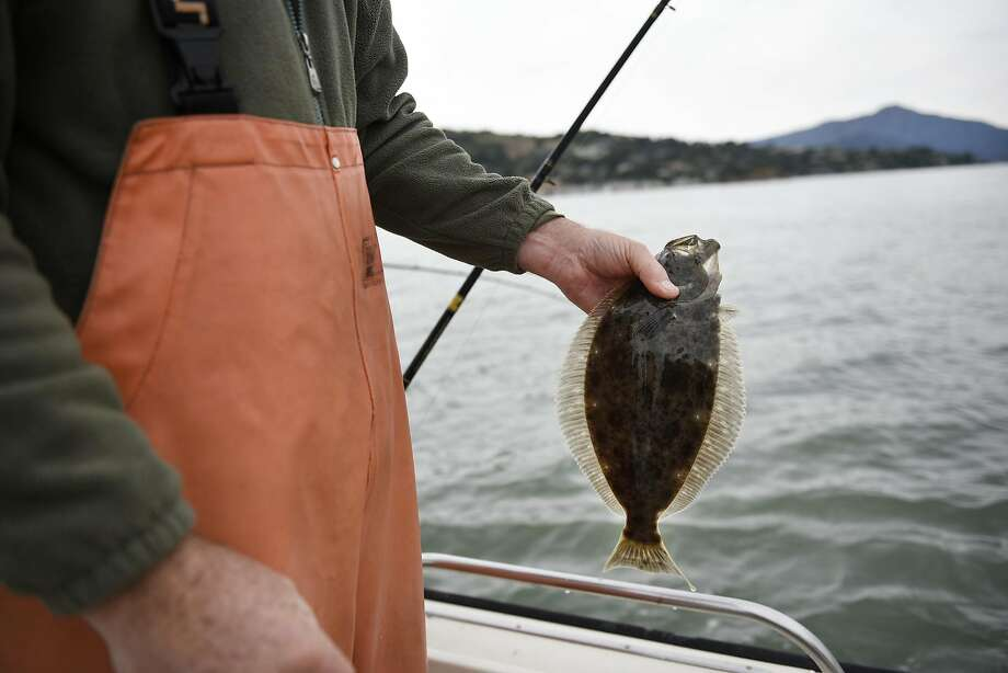 Steve Clark of El Sobrante holds an undersize halibut that he will release while fishing near Paradise Cove in San Francisco Bay. Photo: Michael Short, Special To The Chronicle