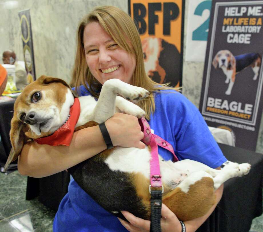 Kelly Vollmer of Syracuse holds rescued Beagle Libby at the Beagle Freedom Project booth at the 6th Annual NYS Animal Advocacy Day in the Well of the Legislative Office Building Tuesday June 7, 2016 in Albany, NY.  (John Carl D'Annibale / Times Union) Photo: John Carl D'Annibale / 40036871A