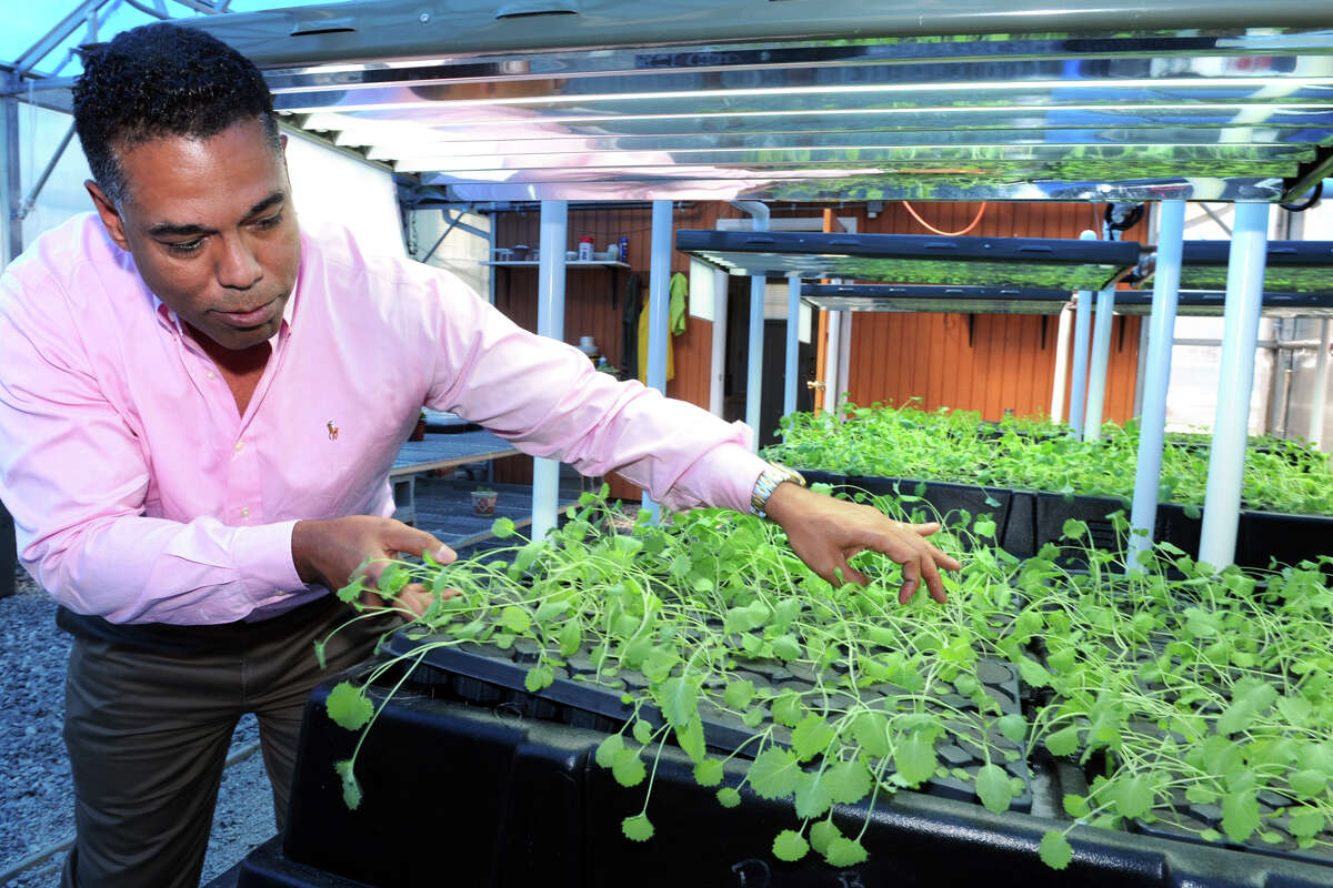 Ron Reynolds, Chairman of Green Collar Foods, displays a tray of young kale plants under cultivation in a greenhouse at Pivot Community Development Corporation, in Bridgeport. Green Collar and Pivot CDC plan to open a large scale growing facility in Bridgeport next year.