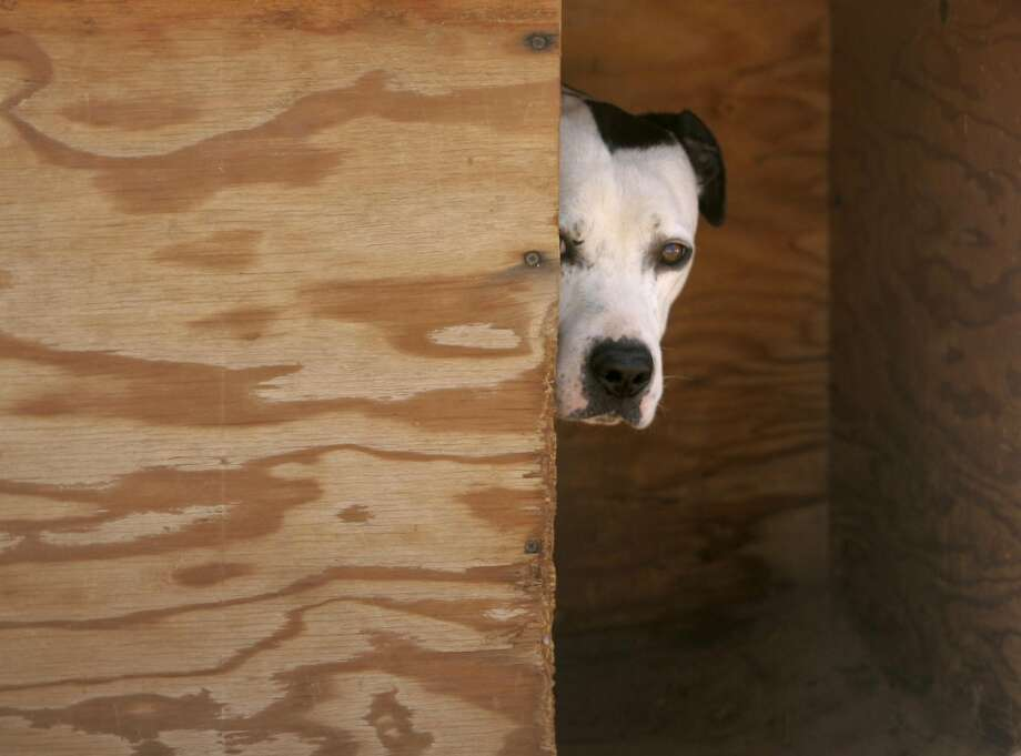 What does it say about us when we feel sympathy for an abused dog, but not for its homeless owner who is clearly mentally ill? Photo: Douglas C. Pizac, AP