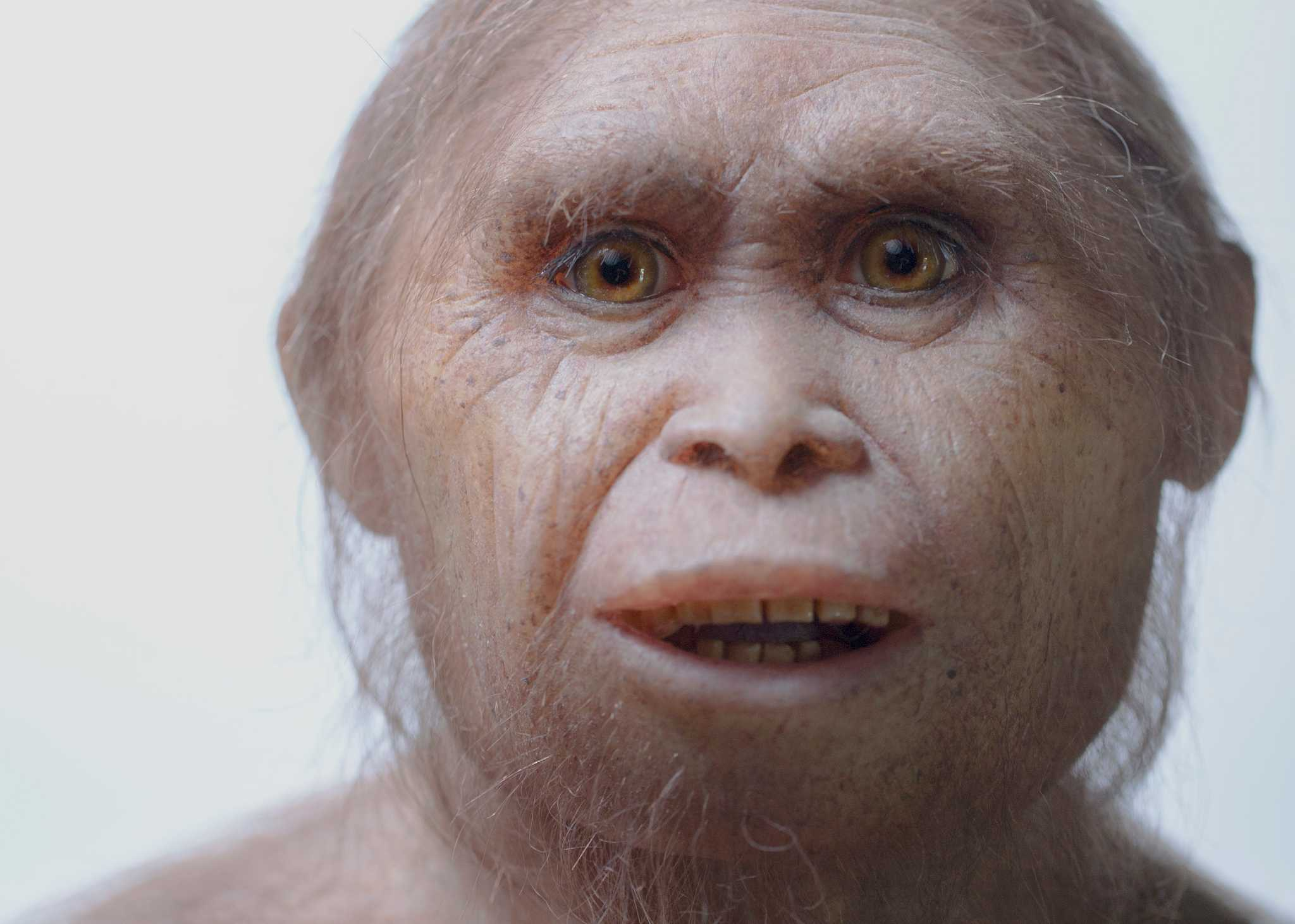 homo floresiensis the hobbit Homo floresiensis, nicknamed 'hobbit' because it only stood about 1 meter tall, is an extinct species of fossil human that lived on the island of flores, indonesia during the pleistocene.