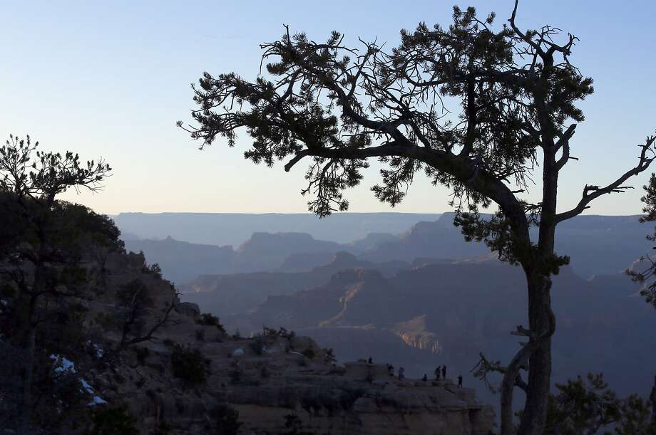A tree frames the view of the Grand Canyon at Mather Point. Photo: Mark Boster, Mark Boster / Los Angeles Times