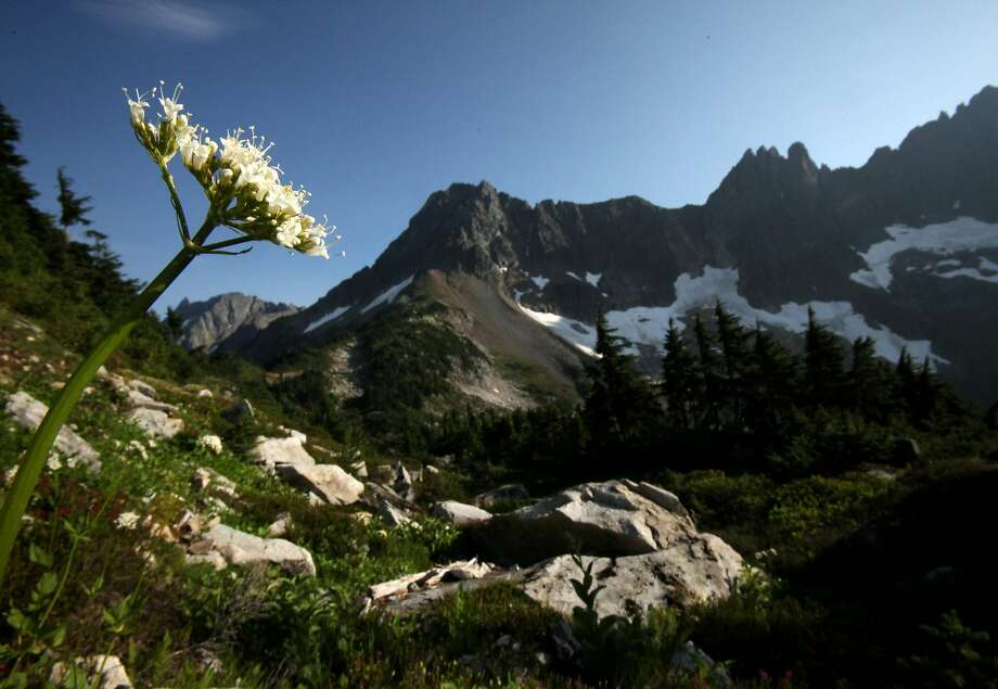 Alpine wildflowers bloom in heather meadows on the trail to Cascade Pass in North Cascades National Park in Washington state Photo: ERIKA SCHULTZ, SEATTLE TIMES/MCT