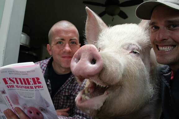 """Esther The Wonder Pig is shown with her owners Derek Walter, left, and Steve Jenkins. Walter is holding a book titled """"Esther The Wonder Pig: Changing the World One Heart at a Time,"""" which the two wrote about their pet pig. Pigs are funny, smart and full of personality, but they have their challenges as pets, too."""