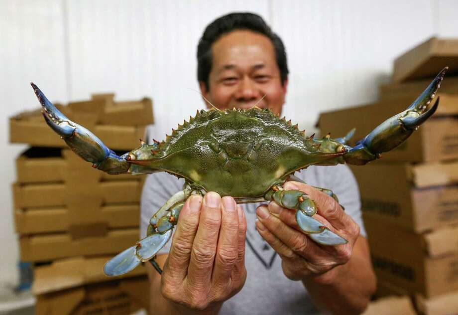 Thomas Ly, owner of T & Y Seafood, smiles as he holds up a live blue crab Thursday, May 12, 2016, in Anahuac. The 56-year-old runs a seafood distribution company that ships seafood across the nation.  ( Jon Shapley / Houston Chronicle ) Photo: Jon Shapley, Staff / © 2015  Houston Chronicle
