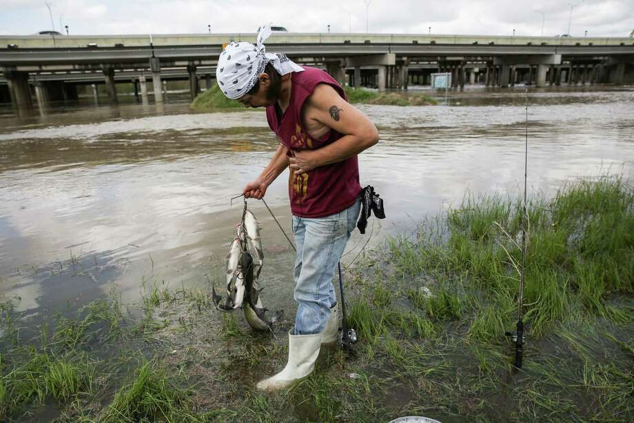 Mike Gary show off his catch while fishing in the San Jacinto River as it overflows onto exit and entrance ramps off of 59 near Humble on  March 11, 2016. Gary says he only fishes when the river floods which makes for a successful day of catching catfish. ( Elizabeth Conley / Houston Chronicle ) Photo: Elizabeth Conley, Staff / © 2016 Houston Chronicle