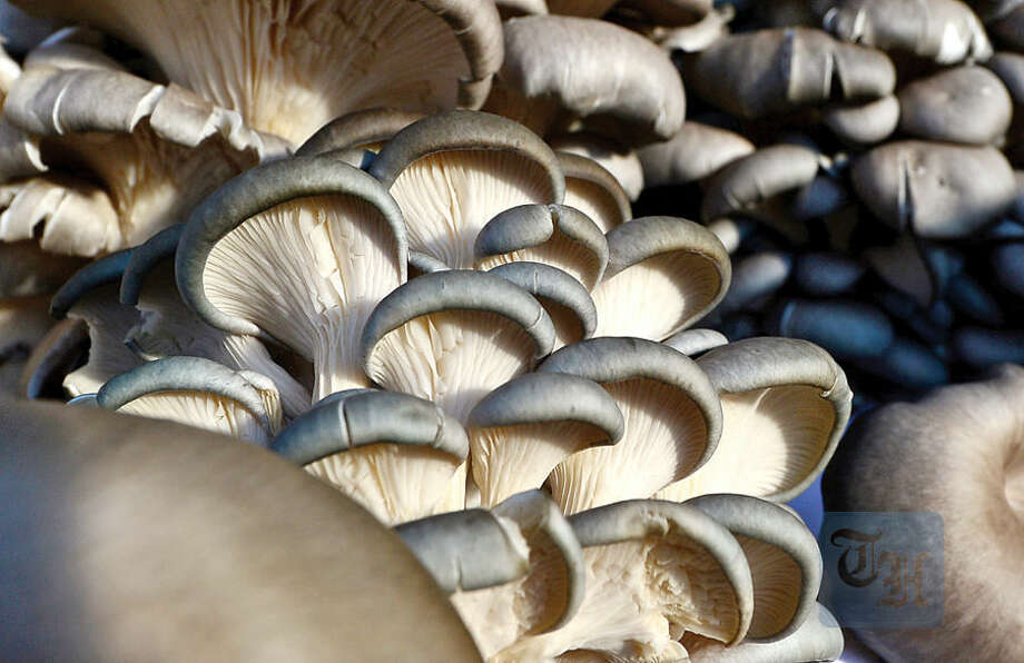 Hour photo / Erik Trautmann Fresh Blue Oyster Mushrooms from Pine Lake Mushrooms for sale atthe Westport Winter Farmer's Market at Gilbertie's Herb Gardens Saturday.