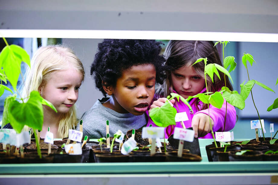 New Canaan Country School- Cultivating curiosity in kindergarten