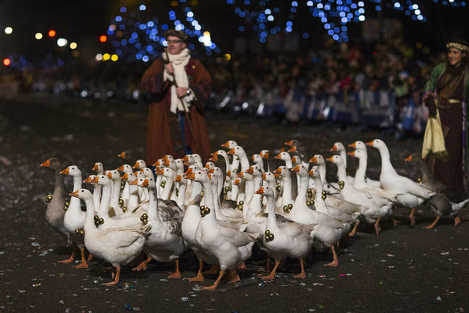 Geese with Christmas decorations are paraded through the streets in Madrid, Monday, Jan. 5, 2015. The traditional parade marks the eve of the Epiphany, a Christian holiday celebrating the story of the three wise men believed to have followed a bright star to offer gifts of gold, frankincense and myrrh to the newborn Jesus in Bethlehem. (AP Photo/Andres Kudacki)