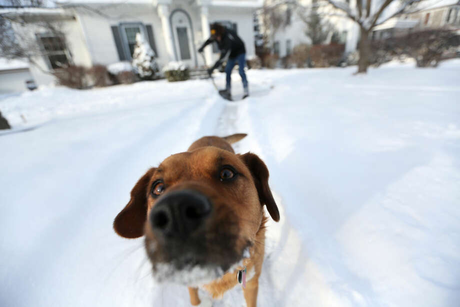 Arnold King shovels his walkway while his dog Max plays on Tuesday, Jan. 6, 2015, along Mt. Pleasant Street in Dubuque, Iowa. A winter storm system moved through the Midwest which brought snow and cold temperatures to parts of Nebraska and Iowa. (AP Photo/Telegraph Herald, Jessica Reilly)