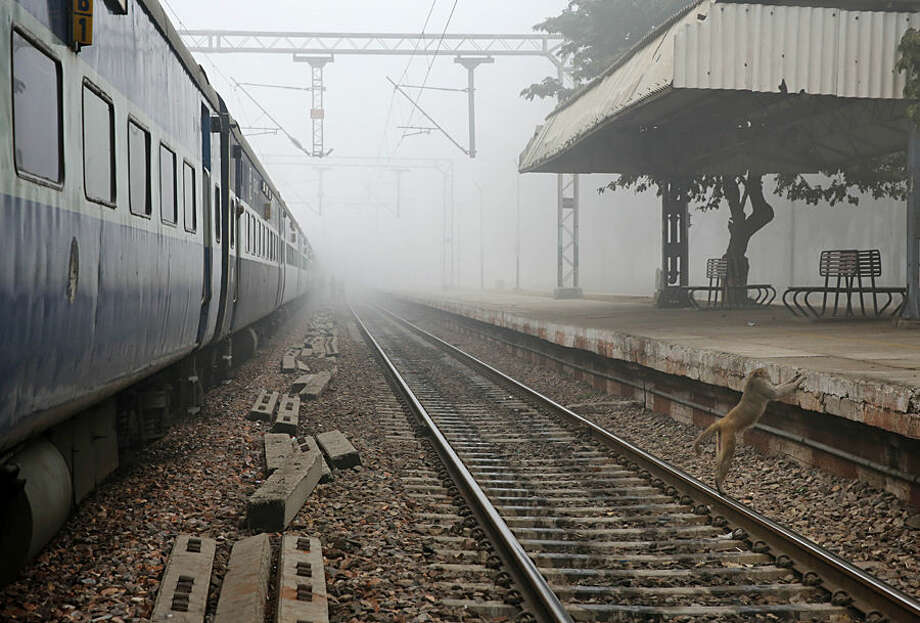 A monkey tries to climb onto a railway platform near a running train on a foggy morning at Chola, in the northern Indian state of Uttar Pradesh, India, Thursday, Jan. 8, 2015. Intense cold wave swept across large parts of north India as fog disrupted road, rail and air traffic in a few areas. (AP Photo/Rajesh Kumar Singh)