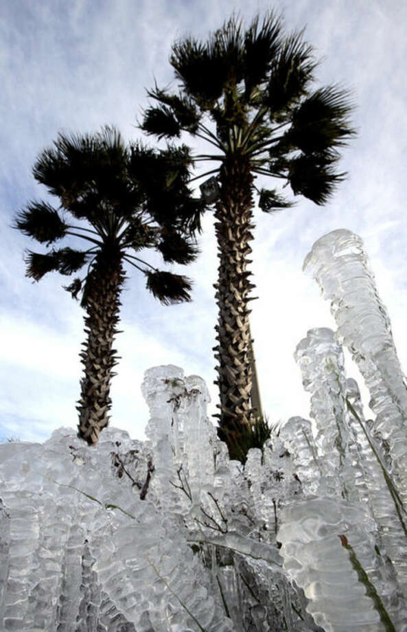 Ice-covered plants are seen in Panama City Beach, Fla. on Tuesday, Jan. 7, 2014. Brutal, record-breaking cold descended on the East and South, sending the mercury plummeting Tuesday. Sprinklers left on overnight created the icy cover. (AP Photo/The News Herald, Andrew Wardlow)
