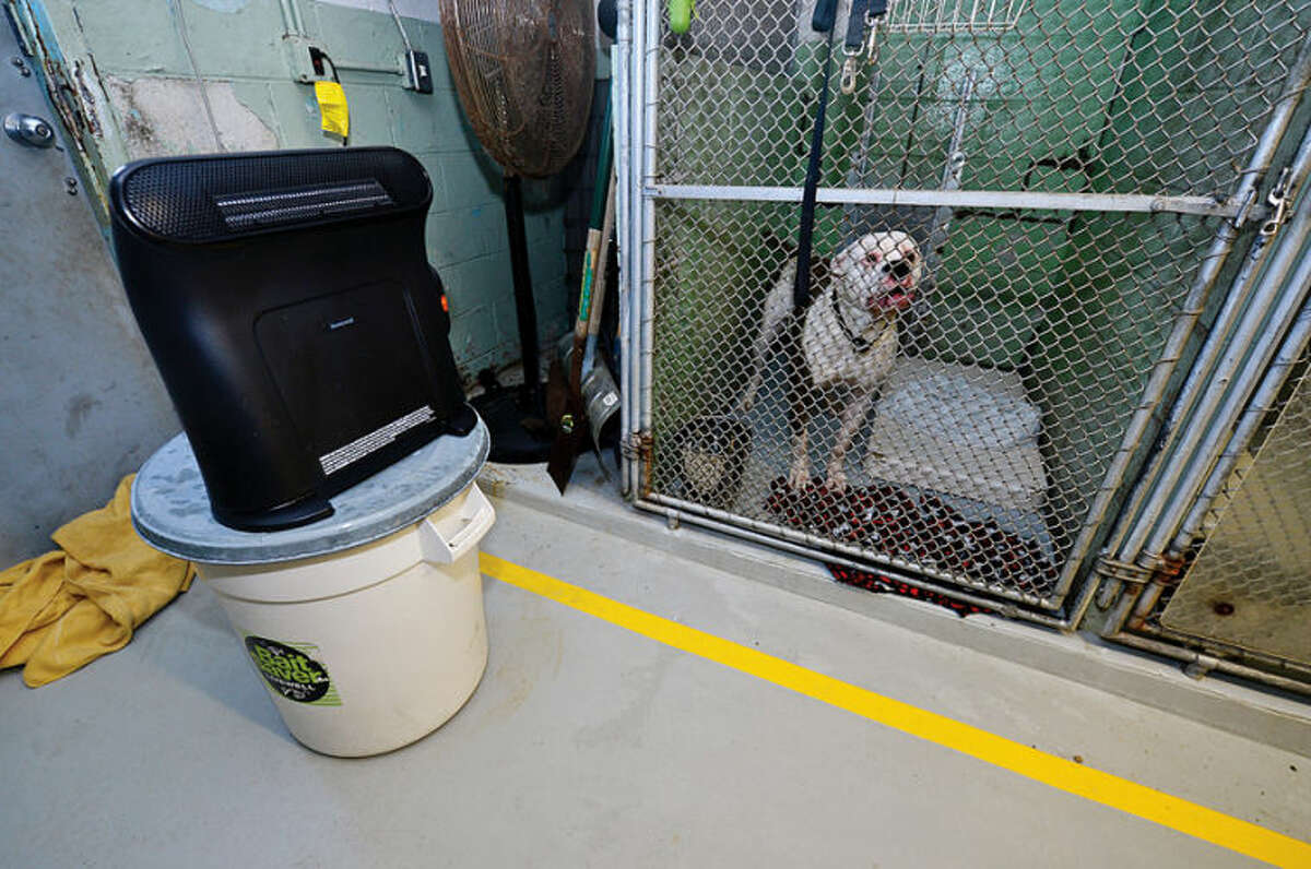 Hour photo / Erik Trautmann Stamford Animal Control director Laurie Hollywood helps dogs at the shelter cope with the freezing temperatures in the dated cinderblock building with coats and space heaters.