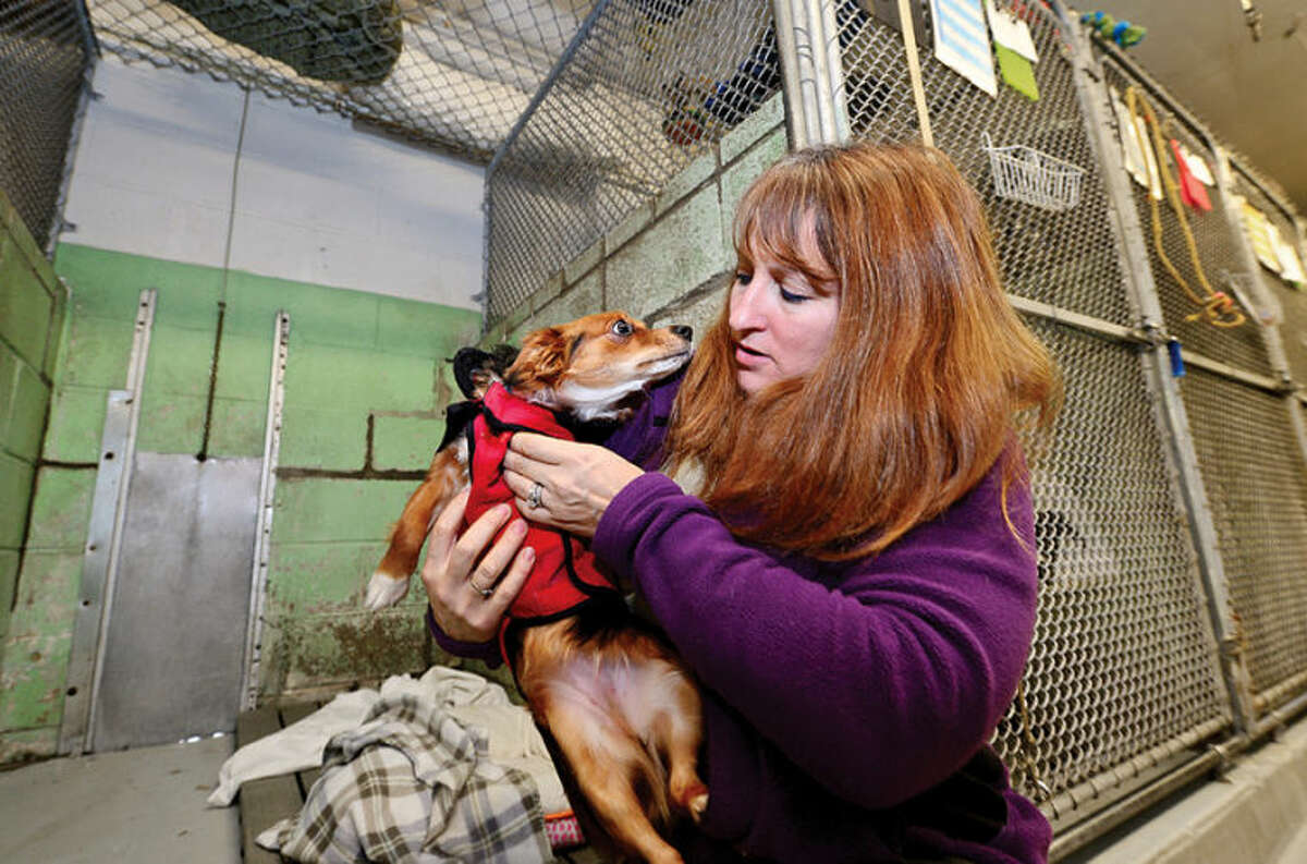 Hour photo / Erik Trautmann Stamford Animal Control director Laurie Hollywood helps dogs at the shelter cope with the freezing temperatures in the dated cinderblock building.