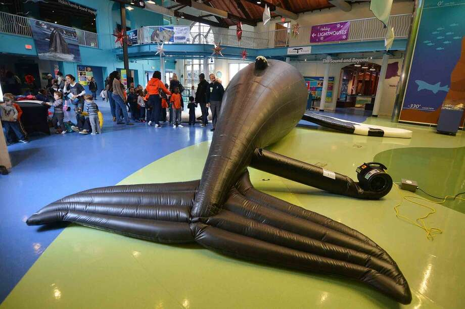 Hour Photo/Alex von Kleydorff 40 foot lifesize inflatable Hunchback whale at The Maritime Aquarium