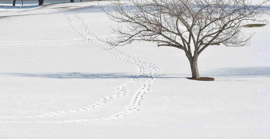 Hour Photo/Alex von Kleydorff A set of footprints in the snow cross the golf course at Shorehaven Country Club on Monday