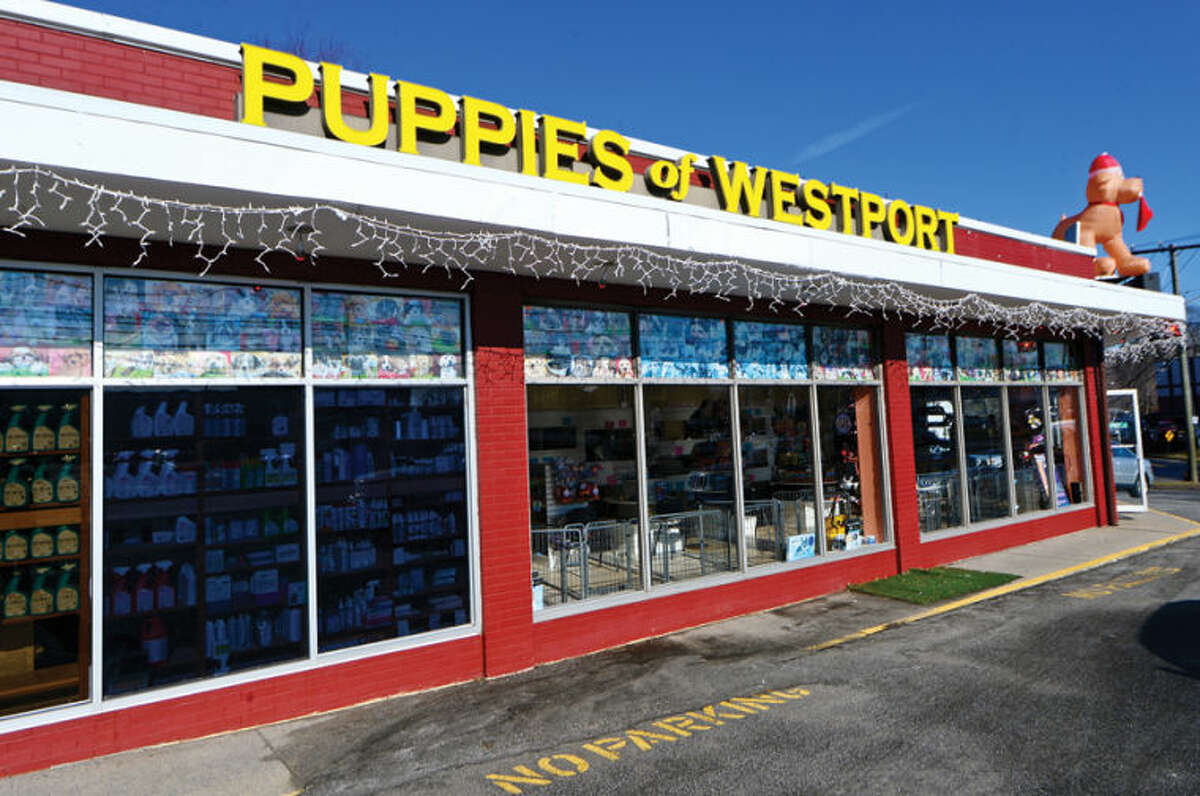 Hour photo / Erik Trautmann Puppies of Westport was vandalized Tuesday night when an activist tried to free the animals by smashing the front door of the establishment on Westport Ave.