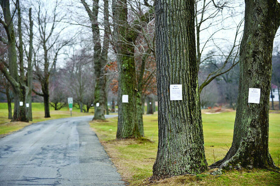 Hour photo / Erik TrautmannThe Westport Parks and Recreation Department, with the consent of the tree warden, has identified approximately 15 trees that are the last of the originals along the entry road to Longshore Park. The iconic row of trees were made famous in photographer Larry Silver' photo.