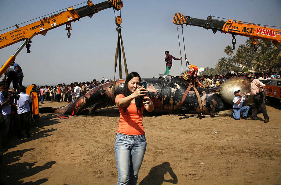 A woman takes selfie as municipal workers use cranes to lift carcass of Bryde whale at the Juhu beach, in Mumbai, India, Friday, Jan 29, 2016. Marine biologists in India were conducting an autopsy on the carcass of 35-foot long Bryde whale that washed ashore on a popular beach in the western city of Mumbai. The beached mammal which appeared to have died at sea two or three days ago was spotted on the beach Thursday by late evening walkers, who informed police. (AP Photo/Rajanish Kakade)