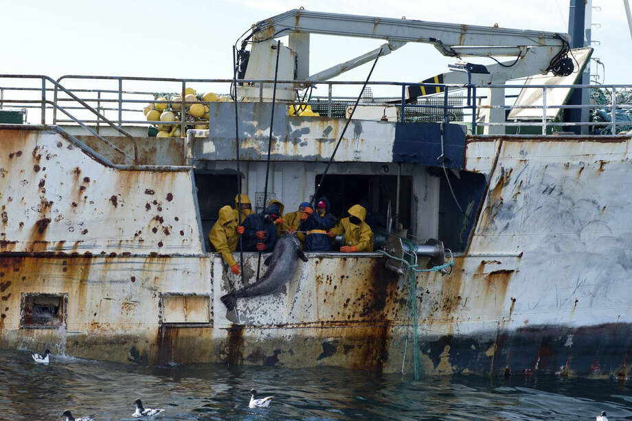 """This Jan. 14, 2015 photo provided by the Royal New Zealand Navy shows a tooth fish as it is hauled onto the illegal fishing boat the"""" Kunlun"""" in the Southern Ocean off the coast of New Zealand. According to the Interpol summary, the Kunlun is owned by a shell company in Panama. It has been called the Black Moon, the Galaxy and the Chang Bai, among other names, and has been registered in North Korea, Sierra Leone, Tanzania, Panama, Indonesia and Equatorial Guinea. (AP Photo/ Royal New Zealand Navy)"""