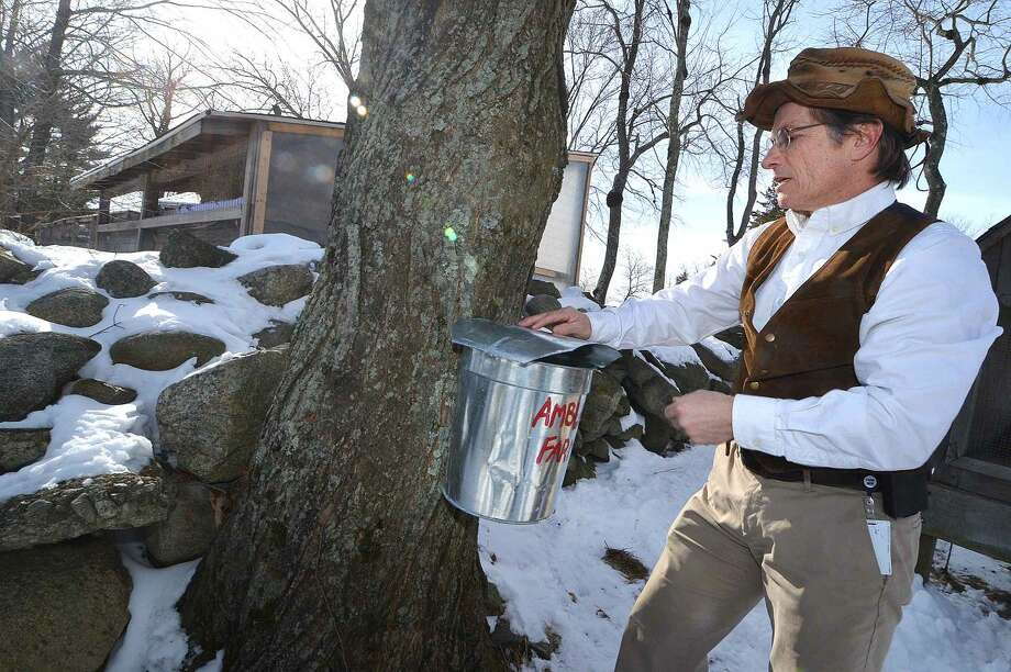Kevin Meehan places a bucket on a fresh drilled tap on one of the sugar maple trees at Ambler Farm.