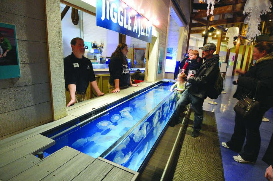 Hour Photo/Alex von Kleydorff The Jiggle a Jelly exhibit at The Maritime Aquarium.