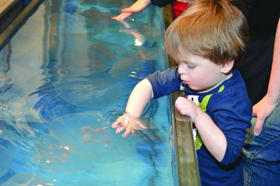 Hour Photo/Alex von Kleydorff 2 yr old Lucas Wilson reacxhes for a passing Moon Jelly at The Maritime Aquariums Jiggle a Jelly exhibit