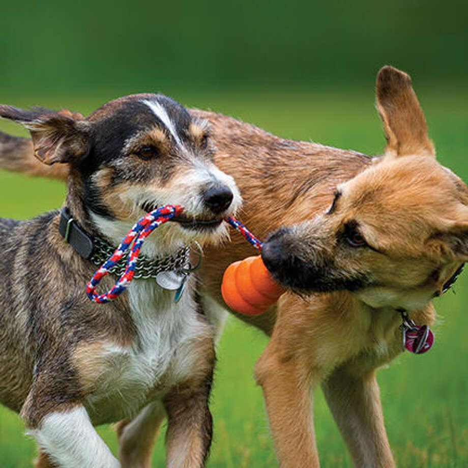 Help Your Dog Fight Flu Season