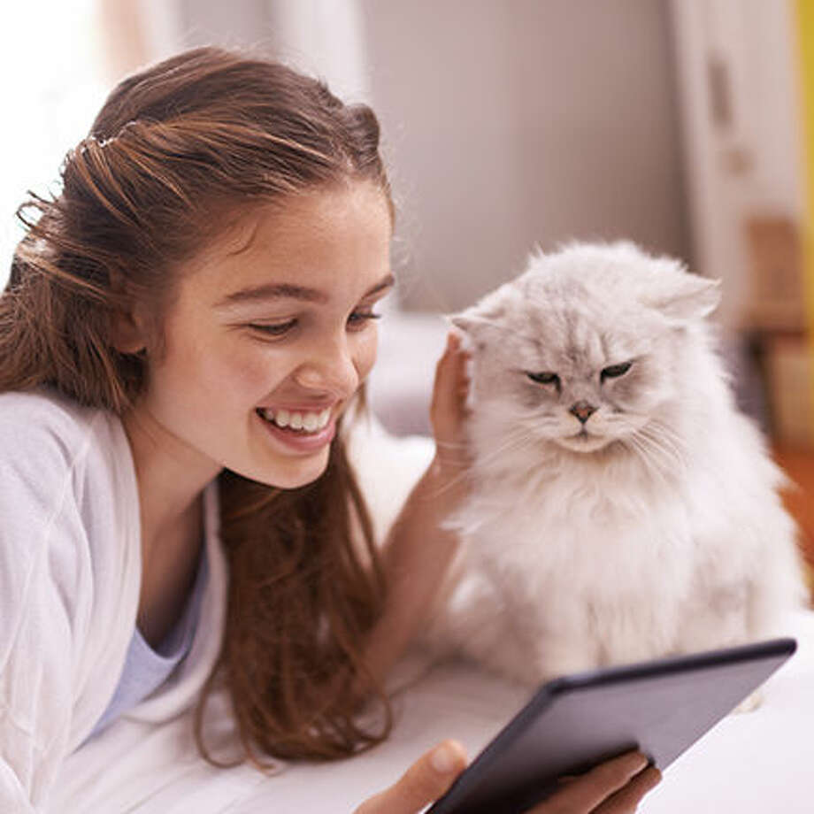 Purr-fect Tips to Protect Cats Year-Round