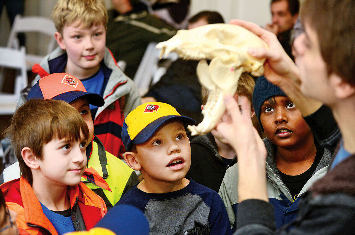 """Pack 22 Cub Scouts Ronan Conway and Trevor Galliga look at a bear skull during the """"Bugz & Bones"""" presentation during the Boys Scouts of America """"Cub Scout Winter Wild"""" at the Stamford Museum & Nature Center on Saturday."""