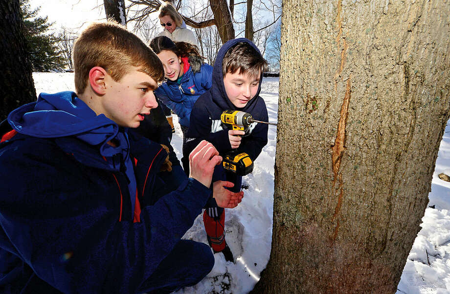 Westport residents Mimi and Nicky Schindler, 11 and 9, drill into a maple tree with the help of volunteer Jan Kineon as local residents learn to Tap-A-Tree as part of the annual Ambler Farm Maple Syrup Program Saturday.