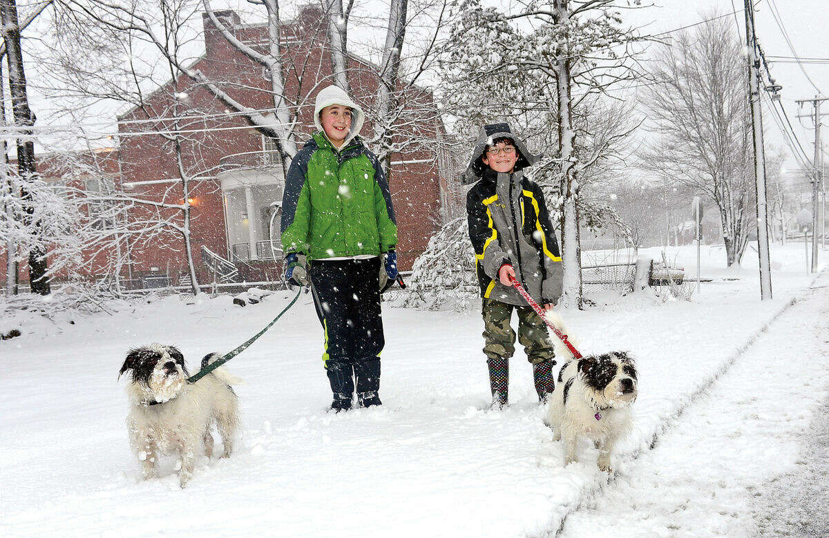Hour photo / Erik Trautmann Joe and Ben Fitzgerald, 11 and 13, walk their dogs, Laverne and Shirley, after schools were closed Friday due to the snow storm in Norwalk.