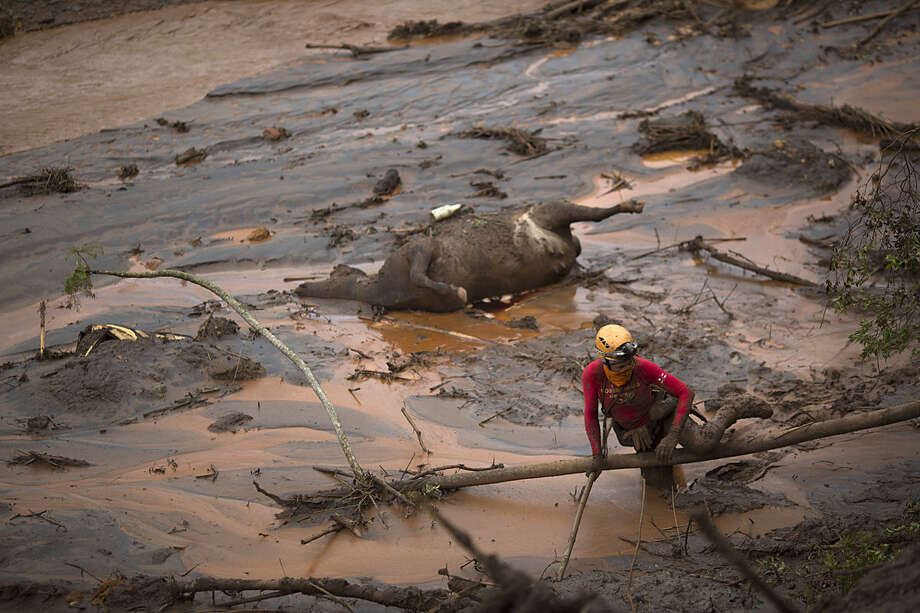 FILE - In this Nov. 8, 2015, file photo, a rescue worker searches for victims next tot he carcass of a dead cow, at the site of the town of Bento Rodrigues, after two dams burst, in Minas Gerais state, Brazil. Samarco, a joint-venture of mining giants Vale and BHP Billiton, involved in Brazil's worst environmental disaster has reached an agreement on Wednesday, Feb. 17, 2016, with local government and public prosecutors to hire an independent auditor to monitor its repair work. (AP Photo/Felipe Dana, File)