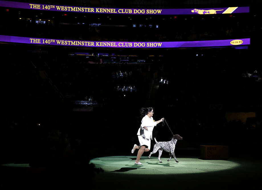 CJ, a German shorthaired pointer, and Valerie Nunes-Atkinson take a lap around the ring during the best in show competition at the 140th Westminster Kennel Club dog show, Tuesday, Feb. 16, 2016, at Madison Square Garden in New York. CJ won best in show. (AP Photo/Seth Wenig)