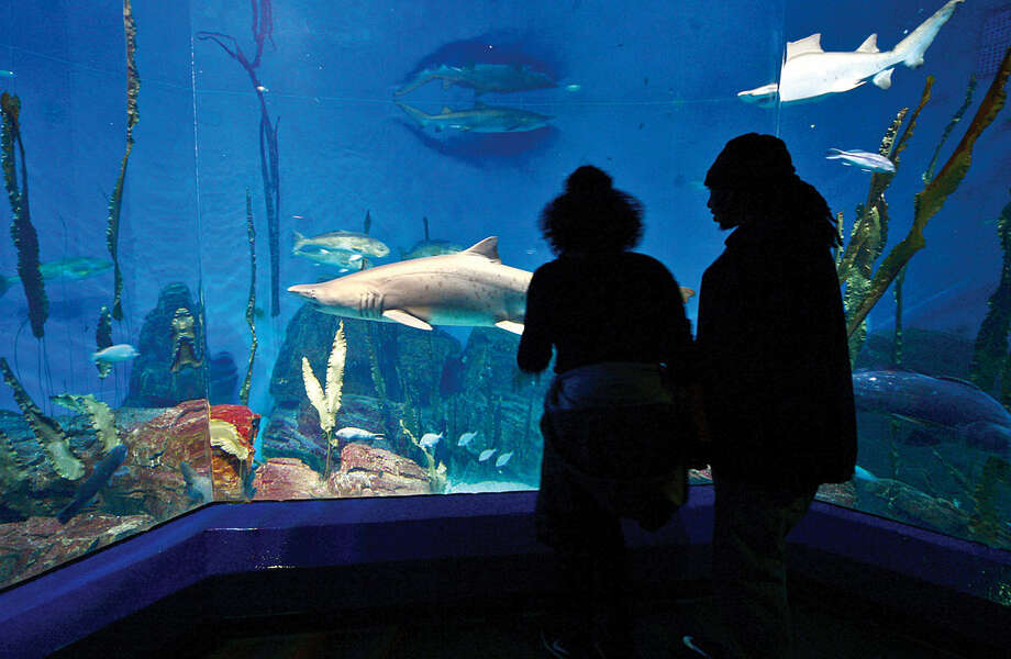 Tiara McBrise and Jeffrey Cora look at the sharks they are about to feed during the Valentine's Feeding Time for Couples at the Maritime Aquarium Saturday.