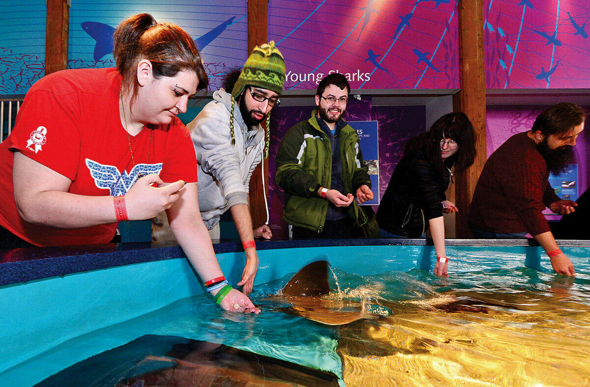 Hour photo / Erik Trautmann Hannah D'Avino and her boyfriend Johnny Morales feed Stingrays during the Valentine's Feeding Time for Couples at the Maritime Aquarium Saturday.