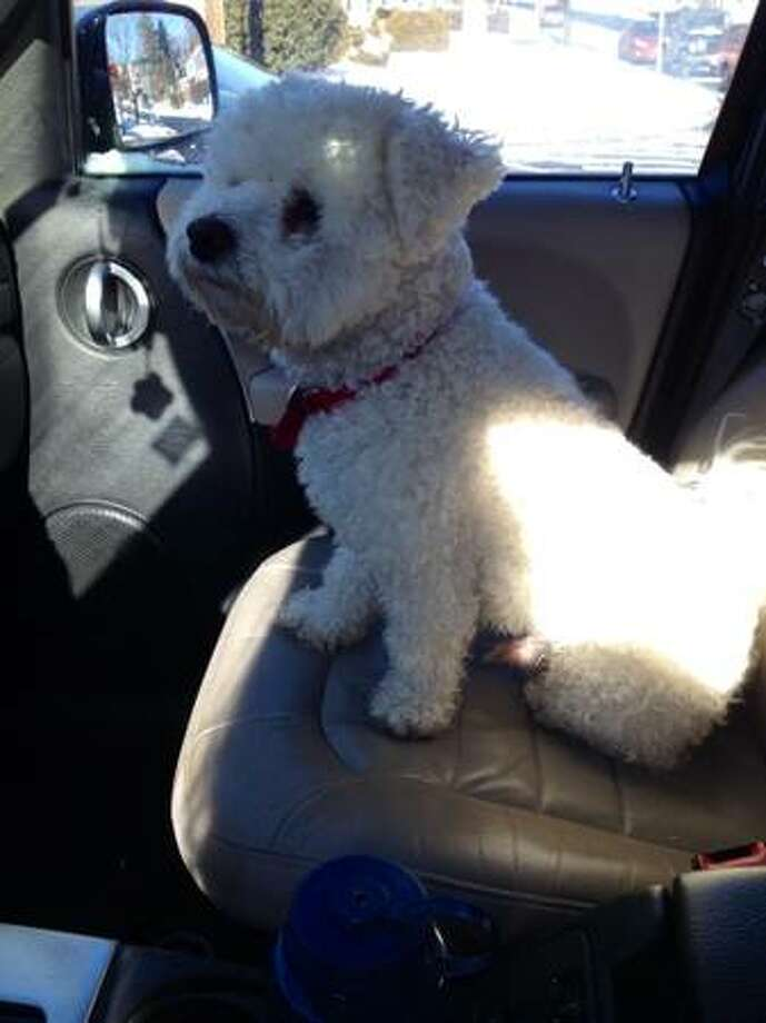 This dog was found in Norwalk a long East Avenue on Sunday.
