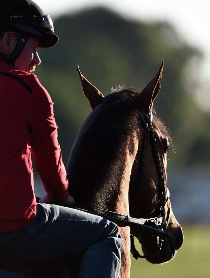 A horse turns his ears to listen to his riders instruction as he heads  to the main track at the Belmont Race Course early this morning June 10, 2016 The day before the 148th running of The Belmont Stakes to be run Saturday in Elmont, N.Y.   201(Skip Dickstein/Times Union) Photo: SKIP DICKSTEIN